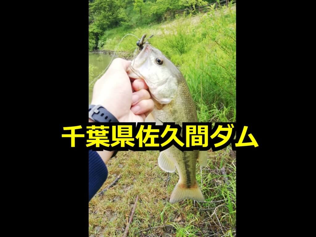 千葉県佐久間ダム バス釣り