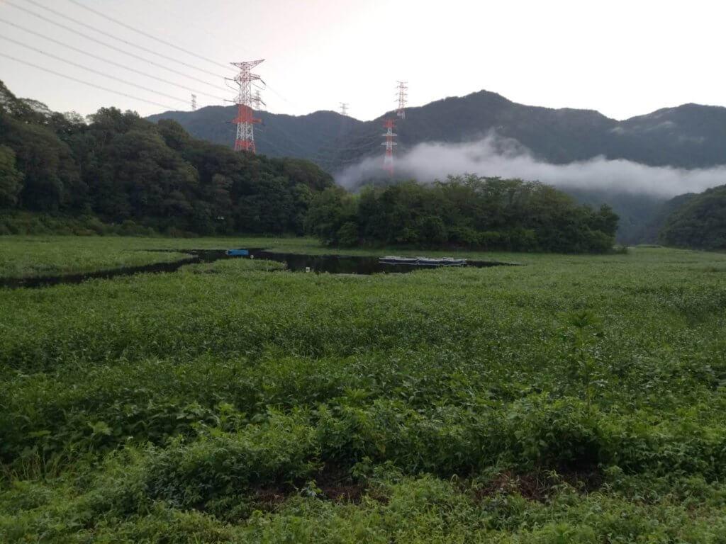 夏の津久井湖はかなり減水しています。