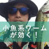真夏の津久井湖釣行