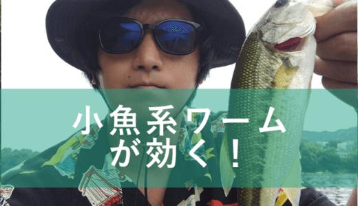 【バス釣り】真夏×アオコ中の津久井湖釣行 ワカサギ系ワームの中層トゥイッチに好反応